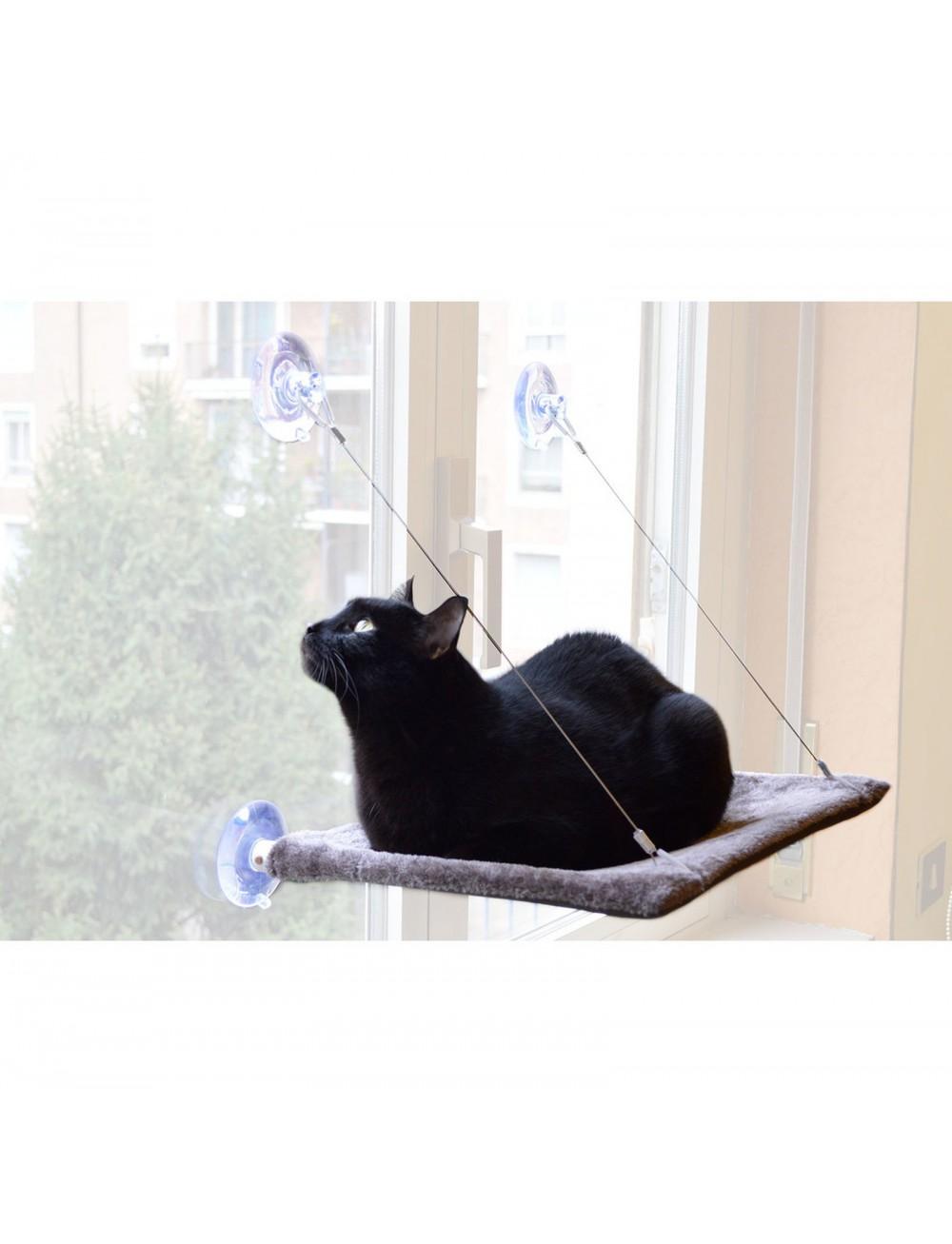 Cat view  United Pets